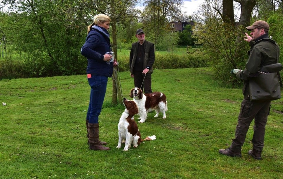 Jachtintroductie Welsh springer spaniel club